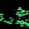 Questo tipo di fungo si anima al buio con le sue qualità bioluminescenti.